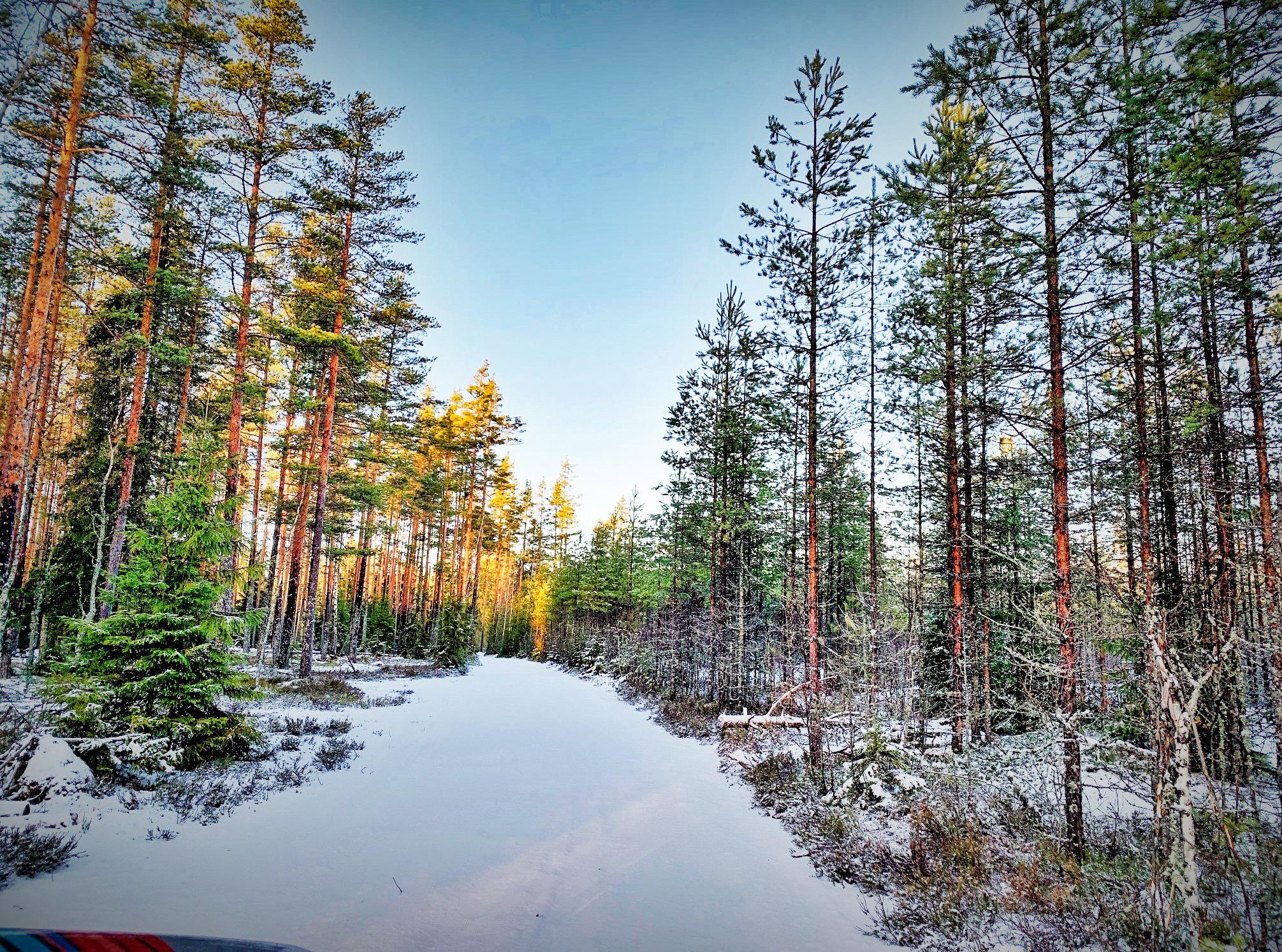 девушки картинки северного леса раз они